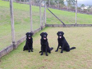 Crédito das imagens: Centro de Formação de Treinadores e Instrutores de Cães-guia